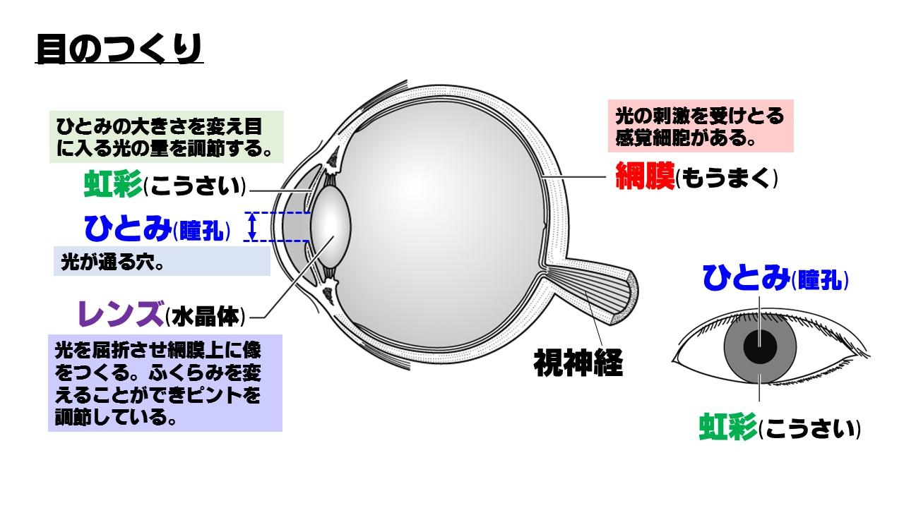感覚器官「目」