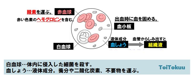 血液の成分(中学理科)