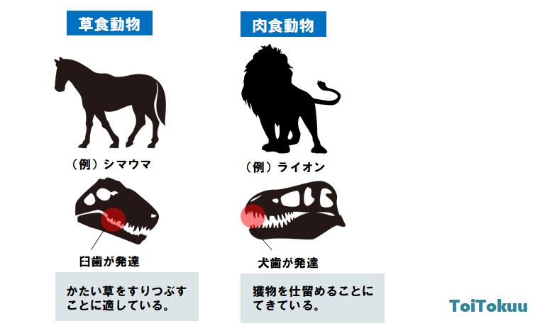 草食動物と肉食動物の違い(中学理科)